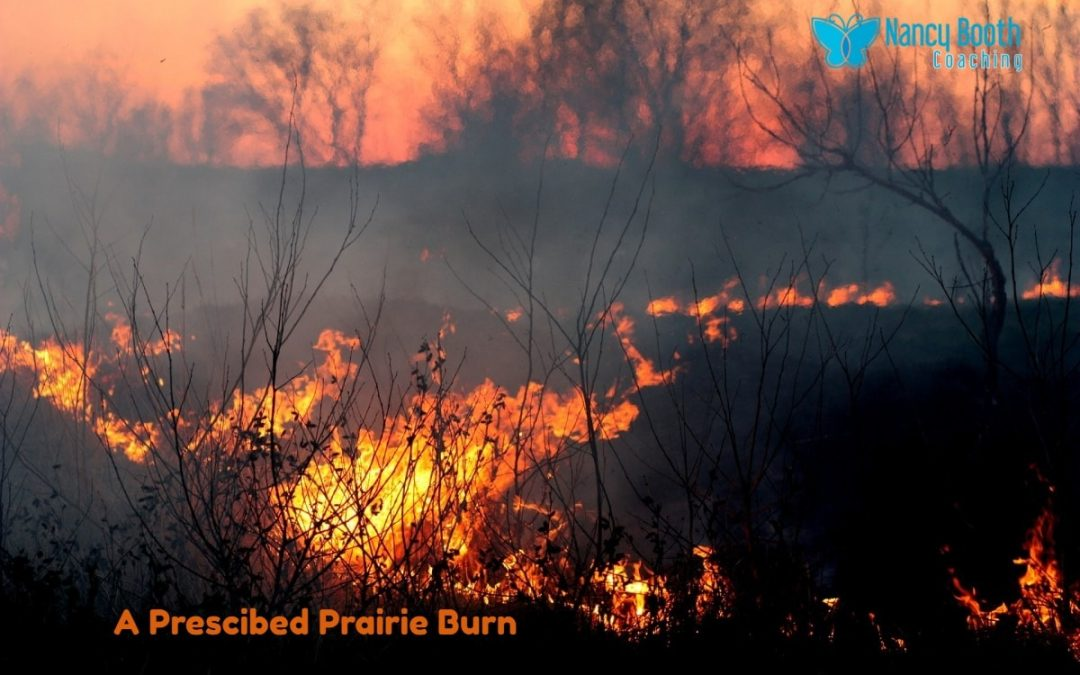 "Can A ""Prescribed Burn"" Bring Growth to Your Life?"